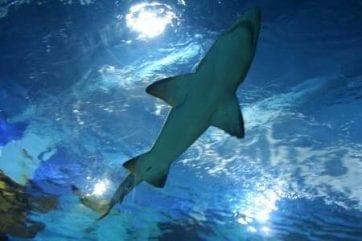 New Entrepreneur Reality TV Show Shark Tank
