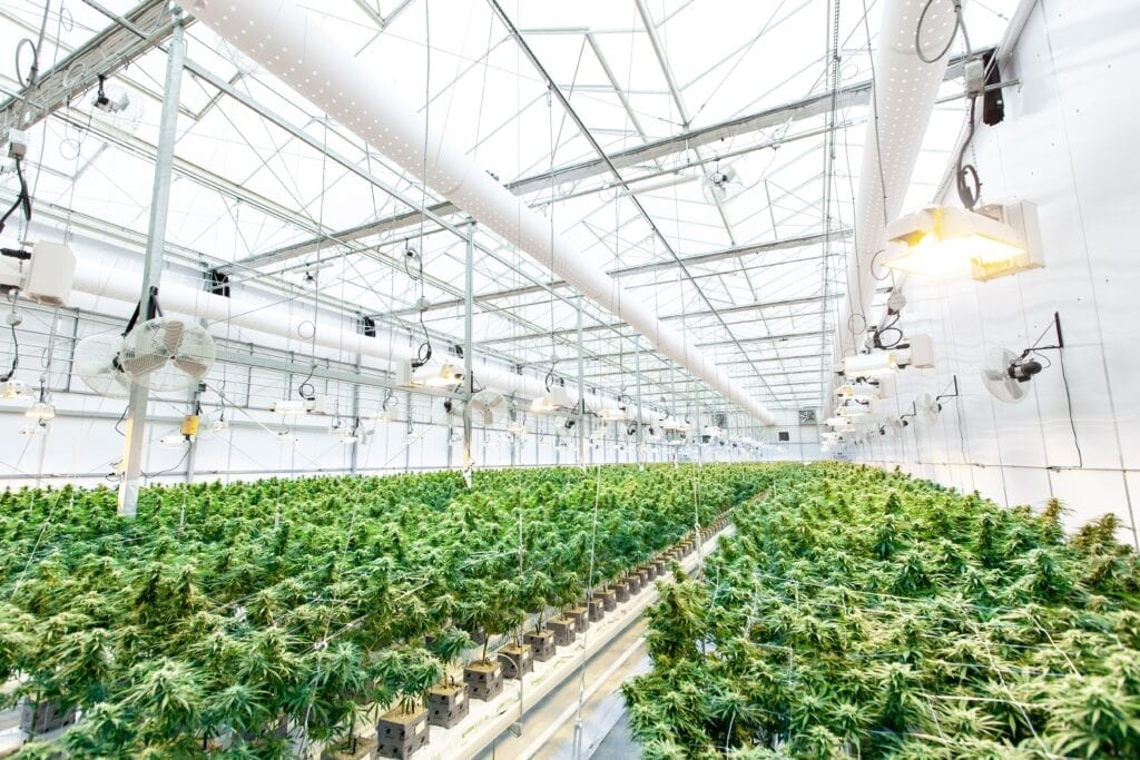 How to Start a Cannabis Business, Part 1